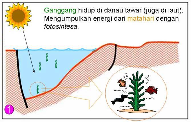 Proses Pembentukan Minyak Bumi dan Gas Alam